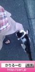 猫H 2016年6月5日.jpg